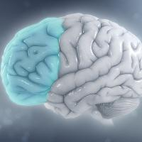 ADHD has an effect on the prefrontal cortex